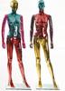 Realistic Full Body Female standing Mannequins Manikin Manequin Dress Form