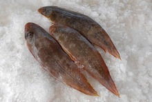 Frozen Sole Fish (Whole & Fillets)