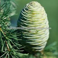 100% Fresh & Pure Cedarwood/ Cedar Wood Oil
