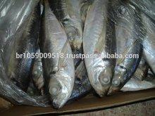 Horse Mackerel Fish