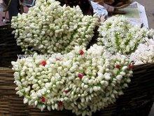 Fresh Jasmine Flower Importers in Malaysia / Singapore / Dubai / Canada / US