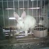 Pet Rabbit Run Cage