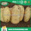 2013 chine frais hollande pomme de terre