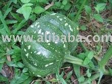 Fresh Pumpkin DALL0000066