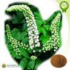 Hot sale and High quality Black Cohosh Extract/Triterpene glycosides/Cimicifugoside
