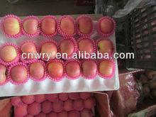 CHINESE FRESH FUJI APPLE NEW CROP