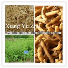 dry herb medicine / dry radix polygonati officinalis piece/ dry polygonatum odoratum / Xiang yu zhu