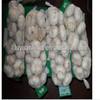 best wholesaler china fresh garlic price