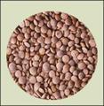 scuro lenticchie