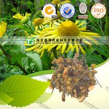 NATURAL herbal medicine I.briannica L.var.sublanata Kom from China supplier
