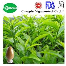 egcg 60%/natural egcg/green tea extract 90% egcg