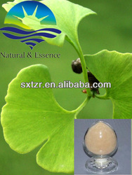 Ginkgo Biloba extract Ginkgo flavone Glycosides 24%/Terpene Lactones 6%