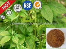 Factory wholesale gynostemma leaves fiveleaf gynostemma herb gynostemma pentaphylla extract