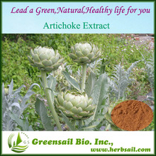 artichoke,artichoke extract,artichoke lamp
