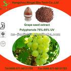 opc grape seed 95%