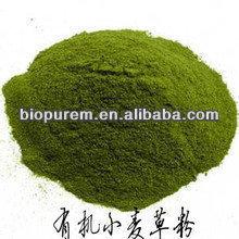 Organic Wheat Grass Powder Premium Quality