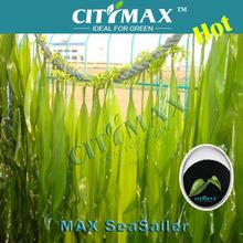 Seaweed Foliar Spray Fertilizer In Agriculture