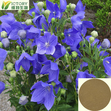 Ratio product 10:1 Balloon Flower extract