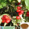 Chinese herb medicine cornus officinalis p.e/cornus officinalis extract