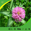 Manufacturer supply pure red clover extract formononetin 485-72-3