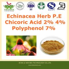 Factory Supply echinacea purpurea extract in bulk