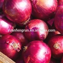 2014 Fresh red onion