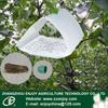 Grapholitha molesta Busck Oriental Fuit Moth for insect sex pheromone lure