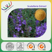 100% Natural Radix Scutellariae extract