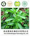 100% stevia extrato puro pó
