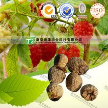 curing the diabetes herbal medicine Raspberries
