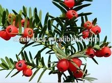 100% Natural Herbal Herbal Powder Taxus Chinensis Extract