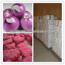 Shandong Spring onion 2013crop