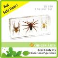 ที่ฝังอยู่ในอะคริลิ/เรซิน, เด็กและเด็กและการเรียนการสอนการศึกษาชีววิทยาตัวอย่าง- แมงมุมเปรียบเทียบ