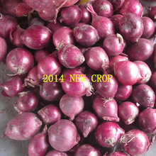 5-12cm different size fresh red onion,2014crop
