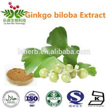 High quality ginkgo biloba leaf extract