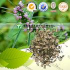 Cure dysmenorrhea herbal medicine Motherwort Herb