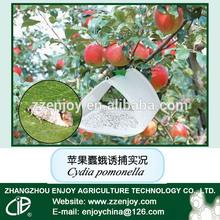 Pheromone professional pest control