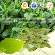Pure herbal medicine Senna Leaf