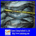 Frozen Fish Supplier of Horse Mackerel From China