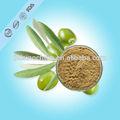 Orgânica extrato de folha de oliveira o mais poderoso antioxidantes naturais hydroxytyrosol