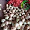 China Fresh Onion fresh vegetable importer for london