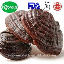 China herbal health food Lucid Ganoderma Extract Reishi (LingZhi)