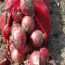 2014 high quality&best price fresh Yellow/red color onion