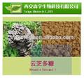 Reine ganoderma lucidum polysaccharid ex, hochwertige natürliche ganoderma lucidum extrakt/reishi extrakt/reishi pilz extrakt