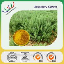 Natural antioxidants 5% rosmarinic acid rosemary powder extract