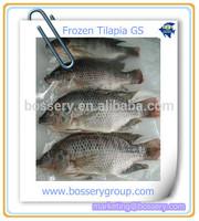 Farm Raised Frozen Fresh Tilapia GS Fish