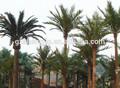 grande ao ar livre decorativa artificial tamareira com falsos tronco