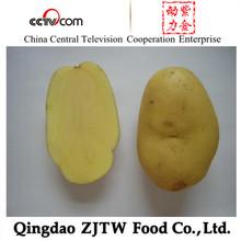 Wholesale Price Fesh Holland 7 Potatoes