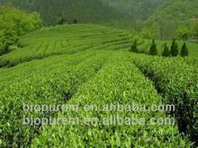 Green Tea extract Polyphenols 20%;95%;98% UV