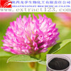 Manufacturer Supply Red Clover Extract Biochanin a